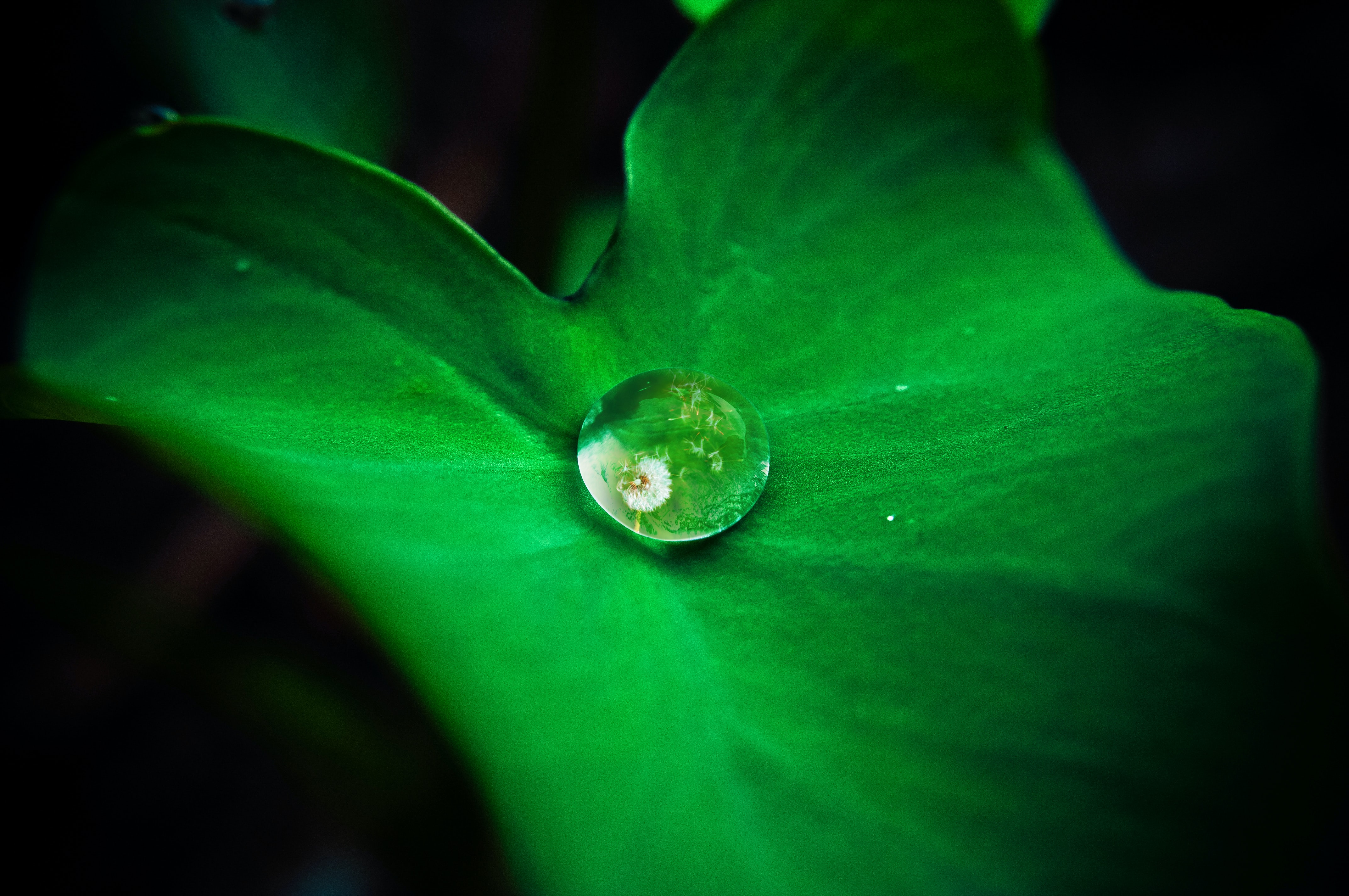 water drops on green leaf time lapse photography