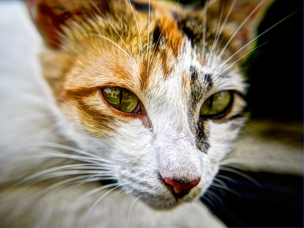 cat's face in shallow focus lens