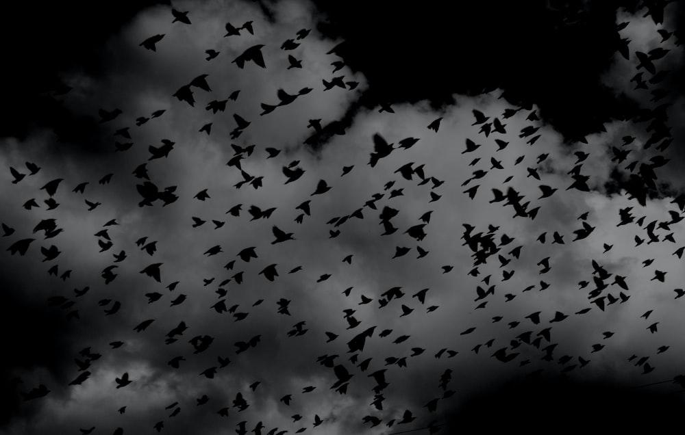 silhouette of flock of birds on sky