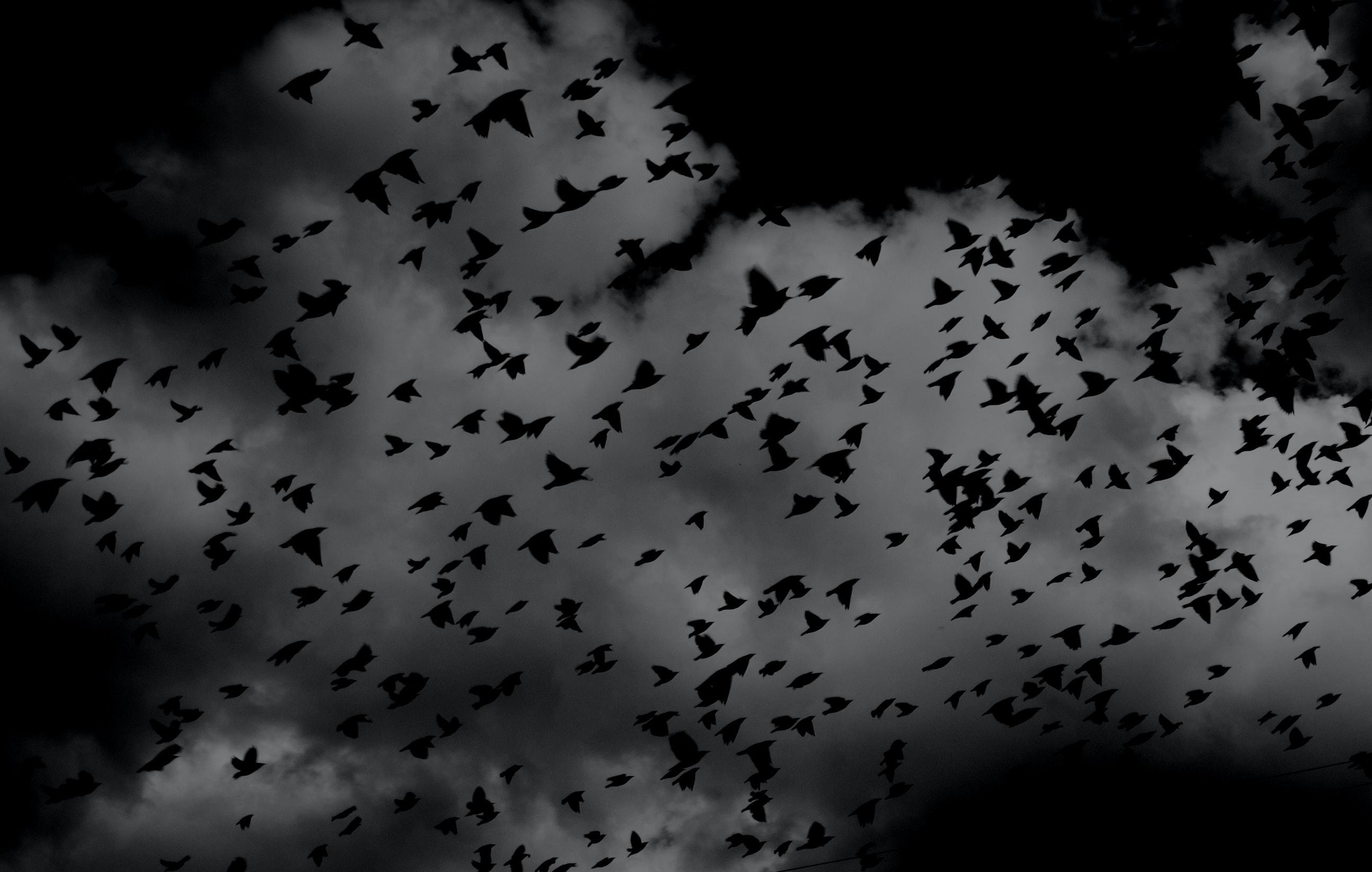 kruki, niebo, ciemność; źródło: Unsplash