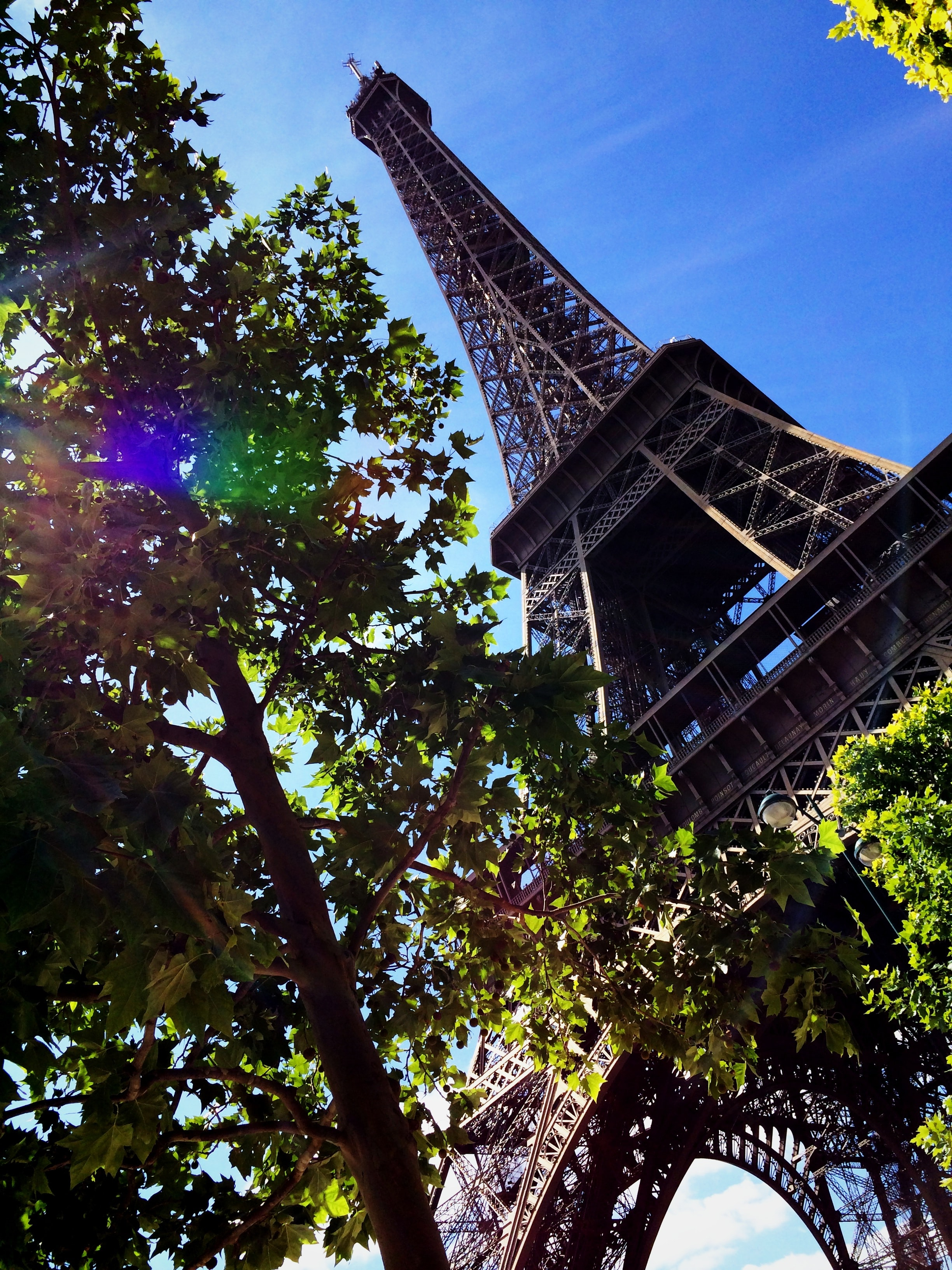 An angled shot looking up at the Eiffel Tower with a tree in the foreground