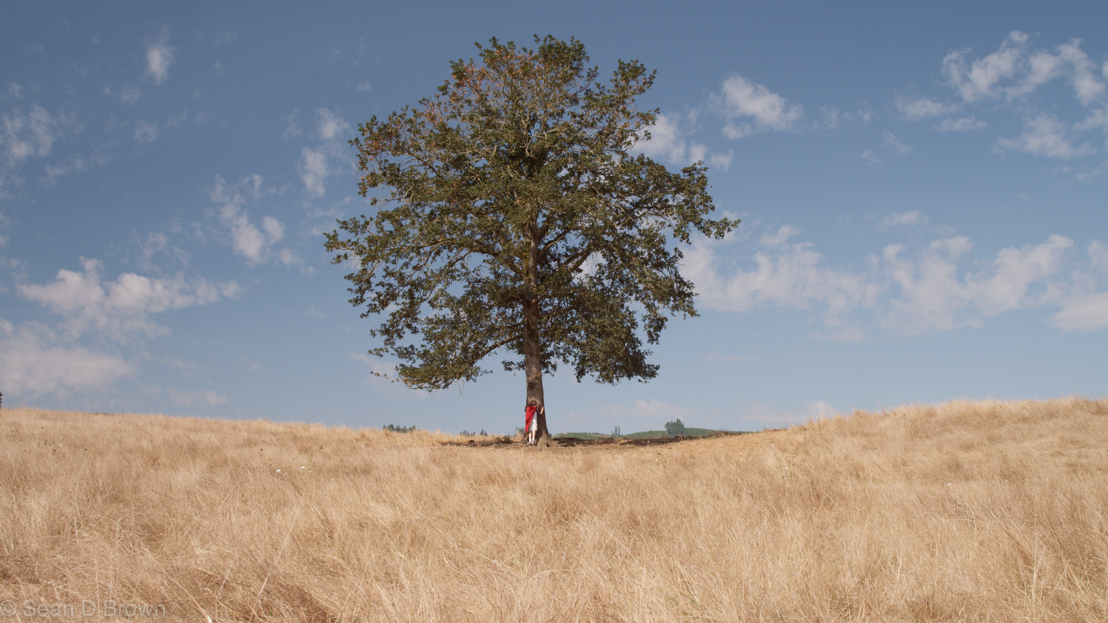 A distant shot of a person leaning against the trunk of a lone tree in a golden field