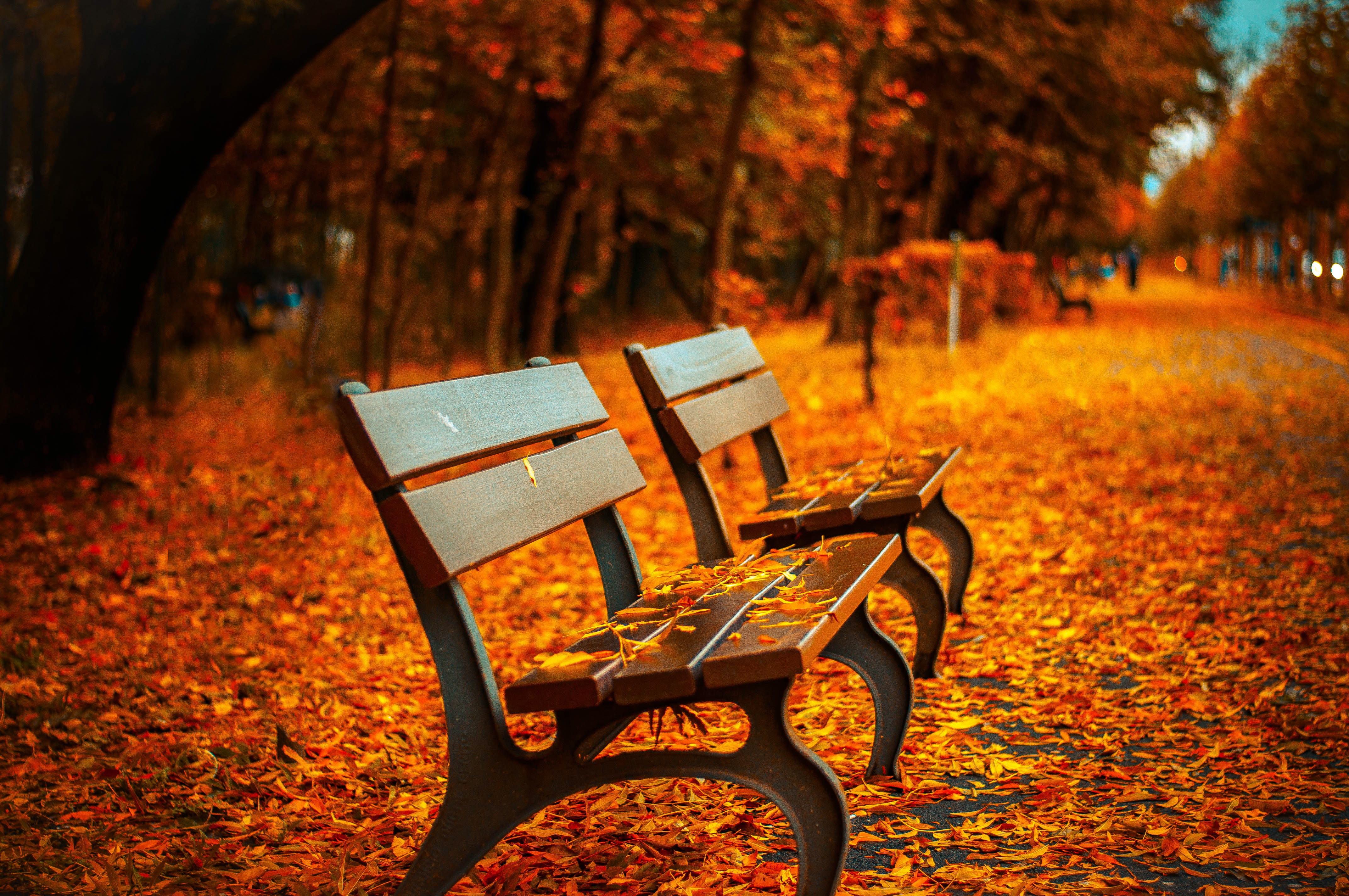 selective focus photography of two brown wooden benches