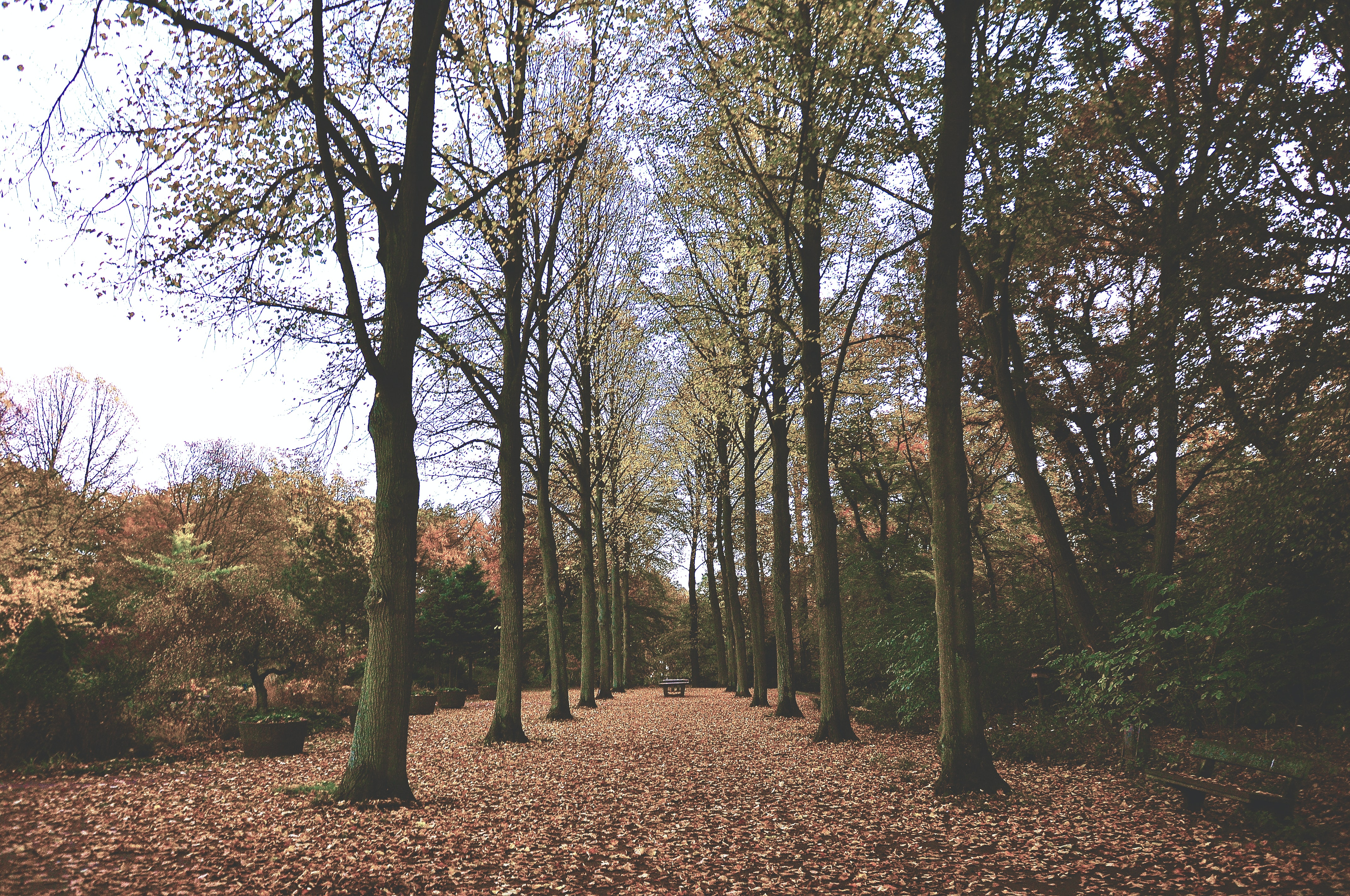 A leaf-covered park pathway lined with nearly bare trees