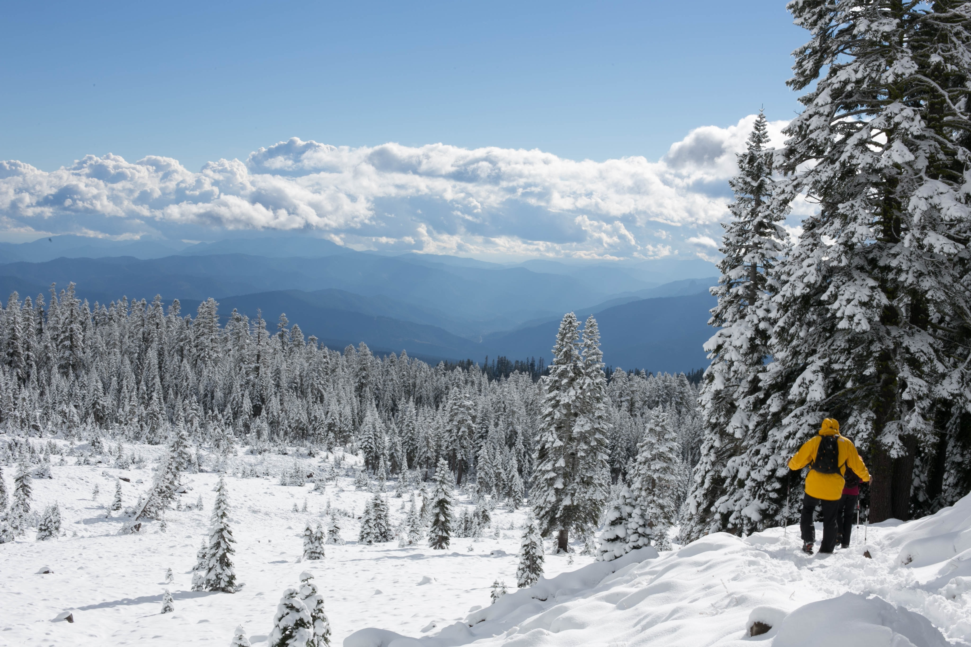 Hiker walking on the frozen snow covered ground in the forest