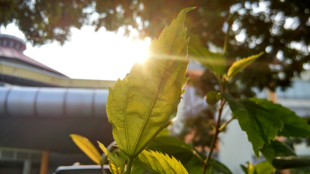 shinning light with green leaf sprout