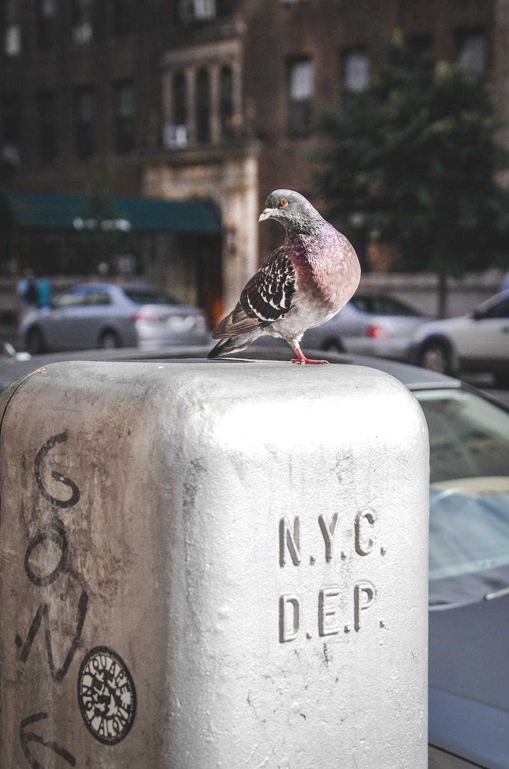 brown bird on gray slab