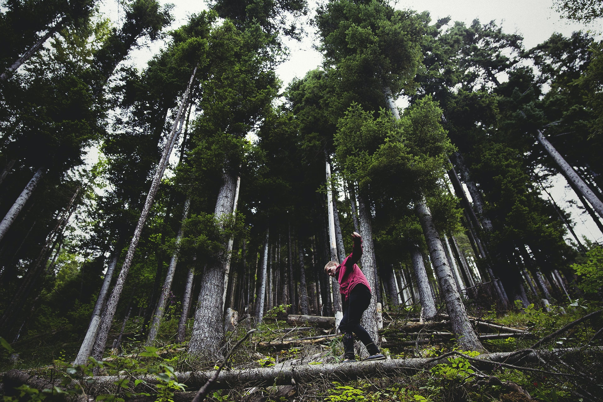 A man walking across a tree in the middle of a forest