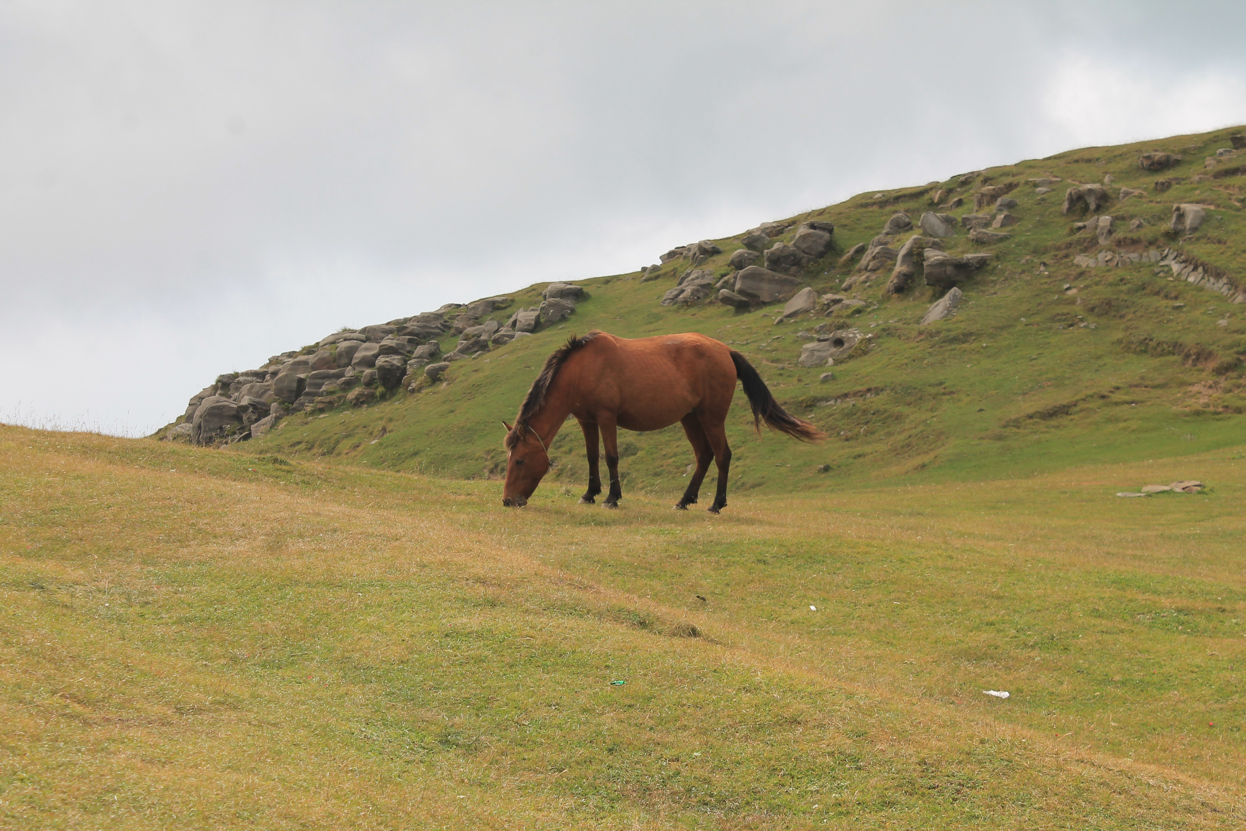 brown horse in middle of green grass field