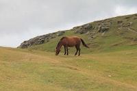 Bay horse grazing near rocks