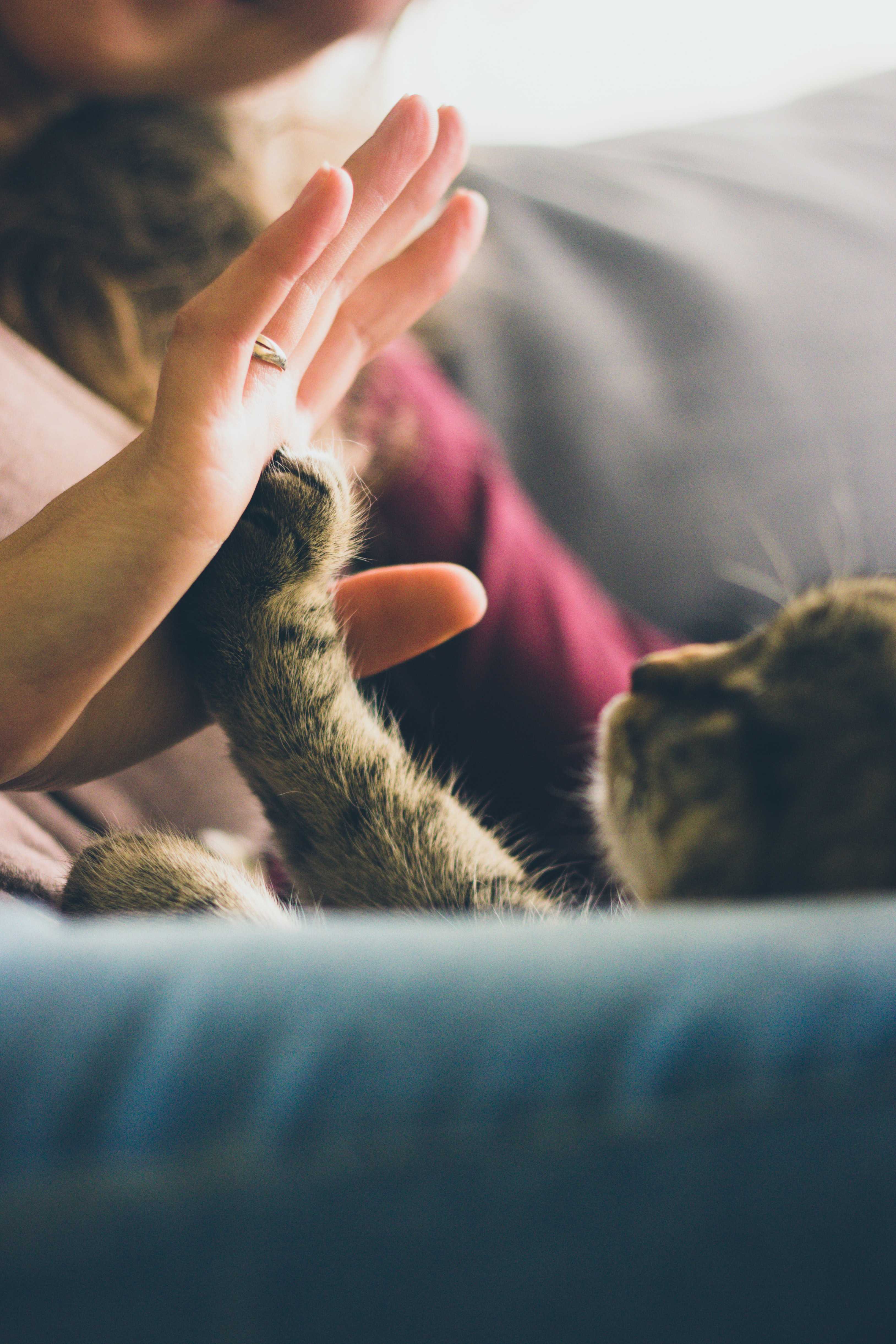 Cat reaches up its paw to high five a woman