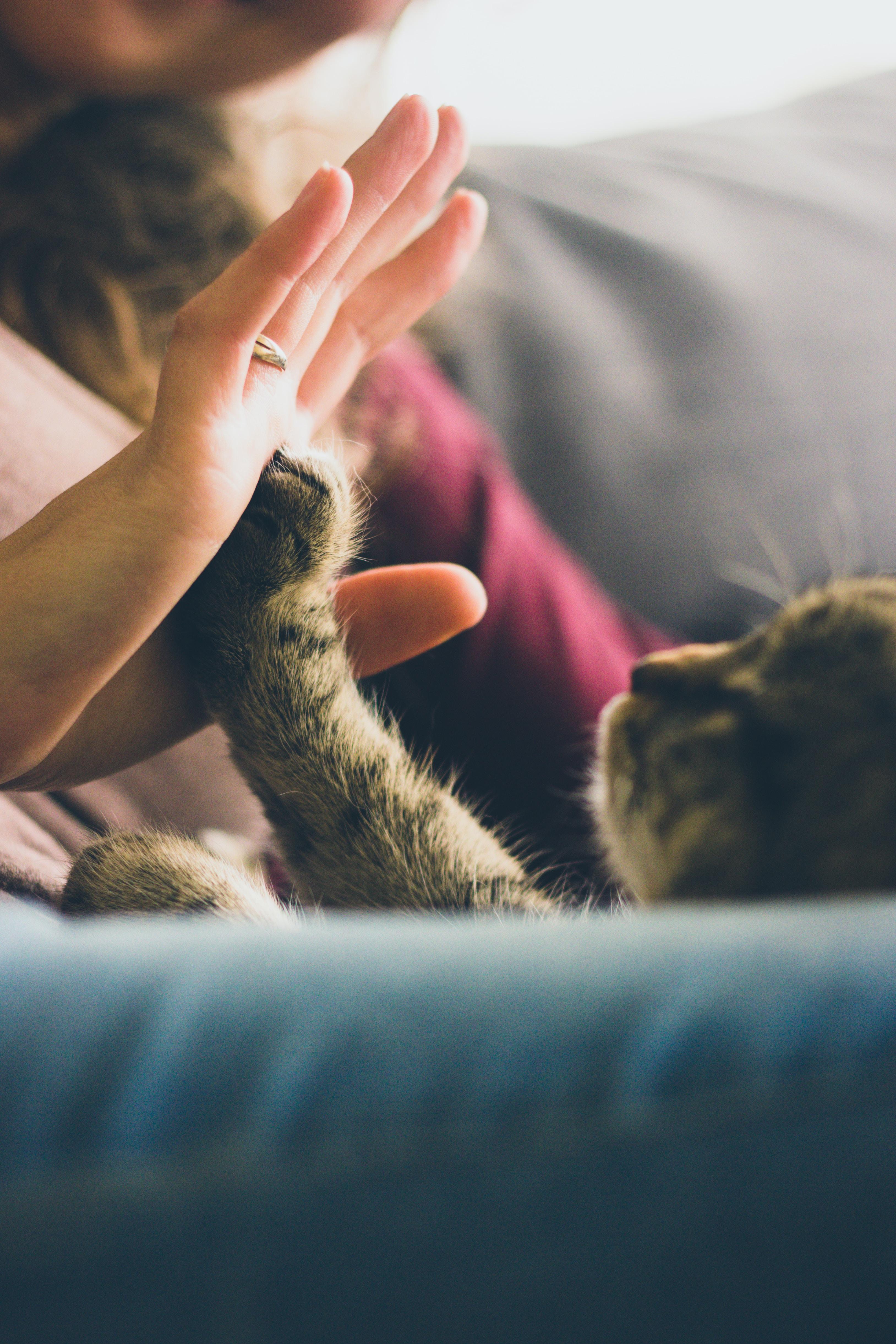 Pets cute stories