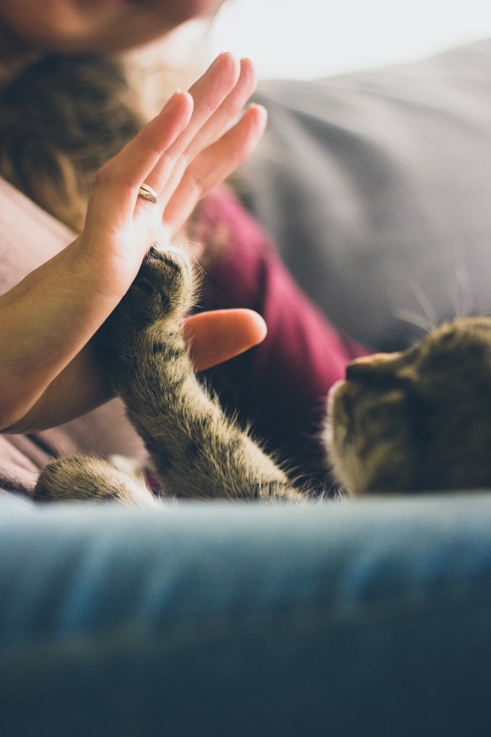 tabby cat touching person's palm