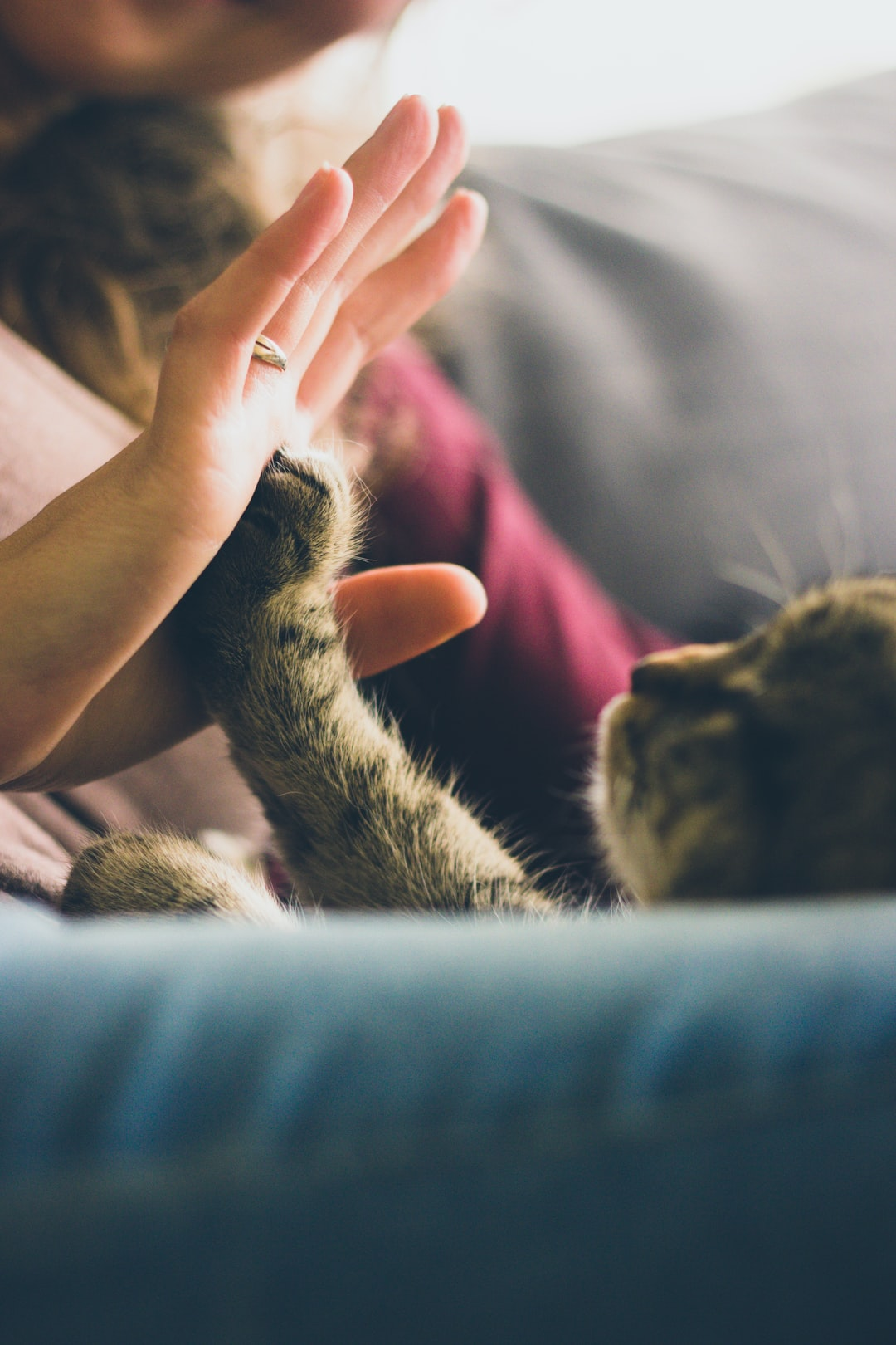 A simple moment as each week-end when i'm home with my wife and my little cat.