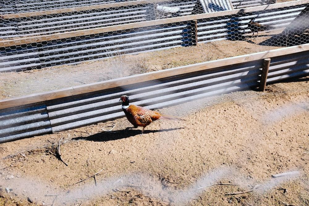 brown bird inside cage