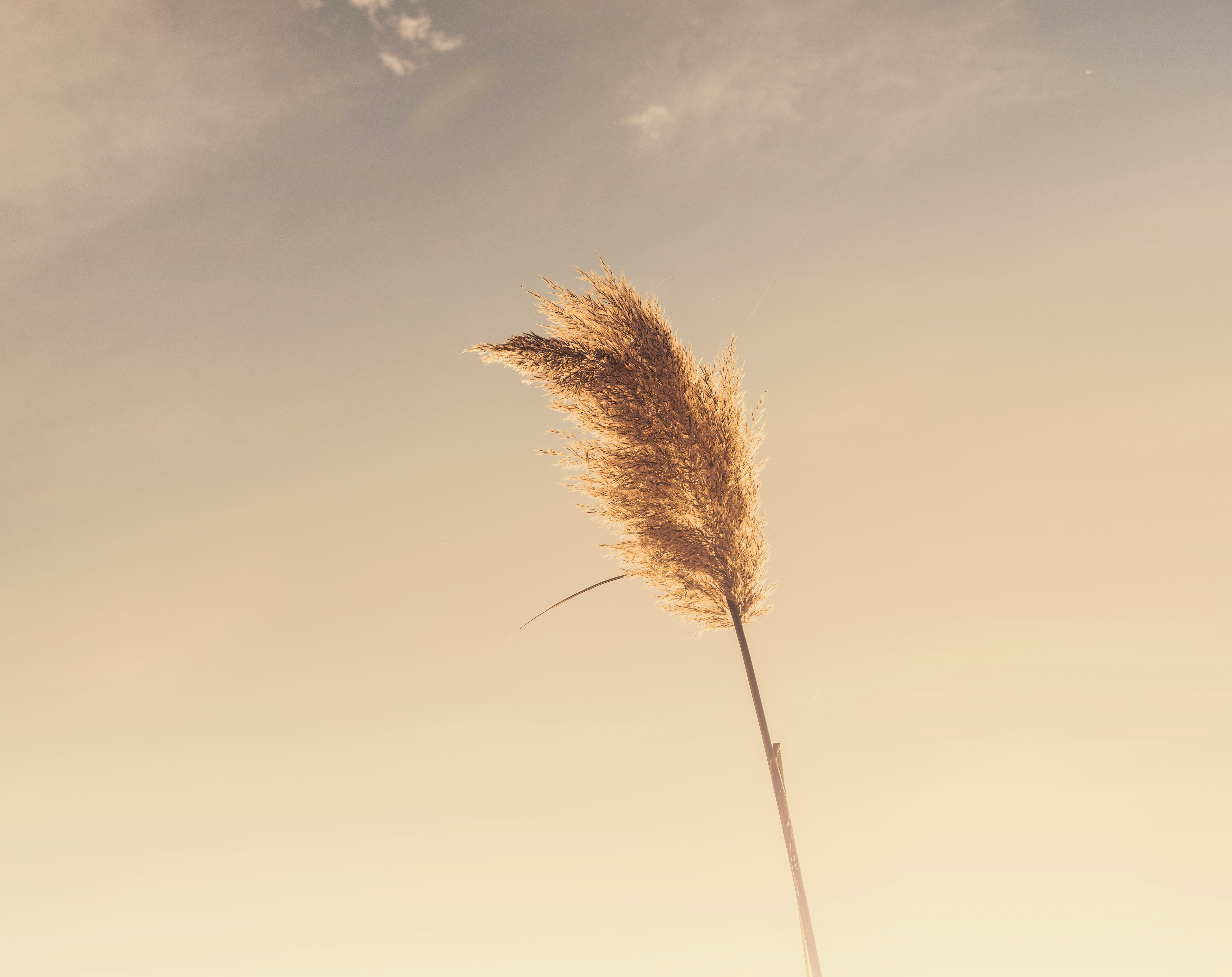A single golden ear of wheat waving in the wind against a bright sky
