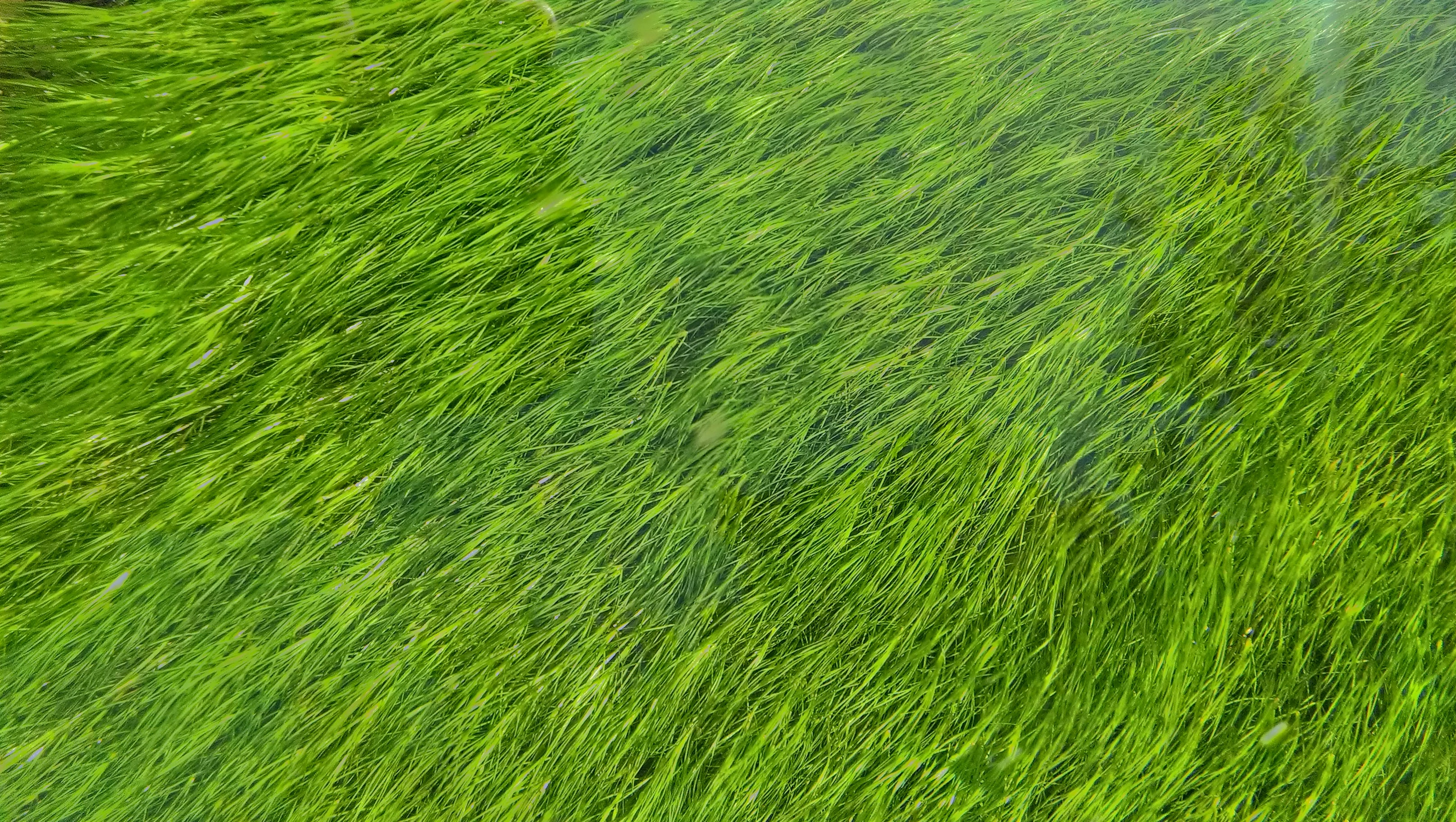 A top view of green grass filling the entire frame