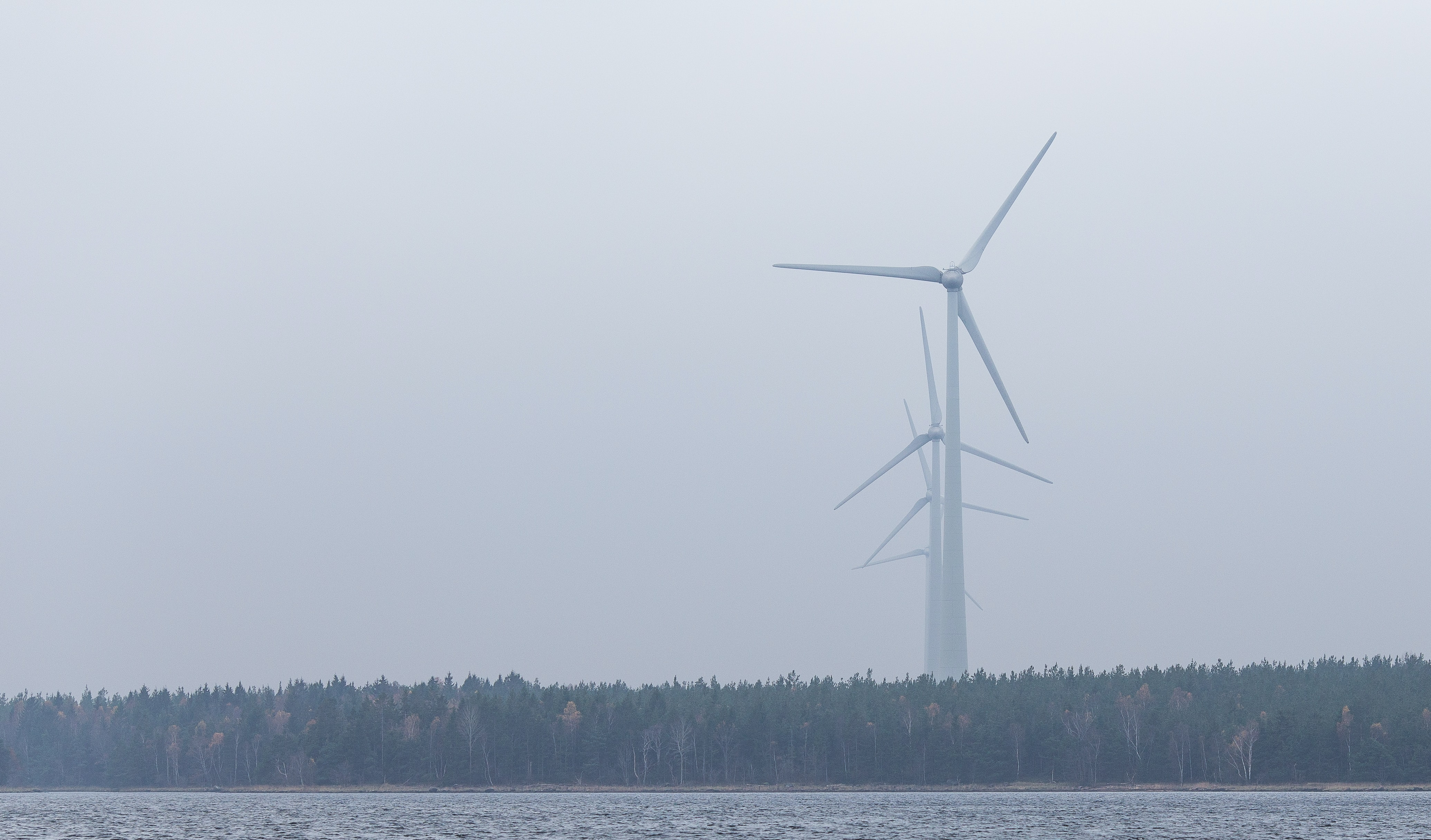 A wind turbine towering in the foggy sky behind a forest