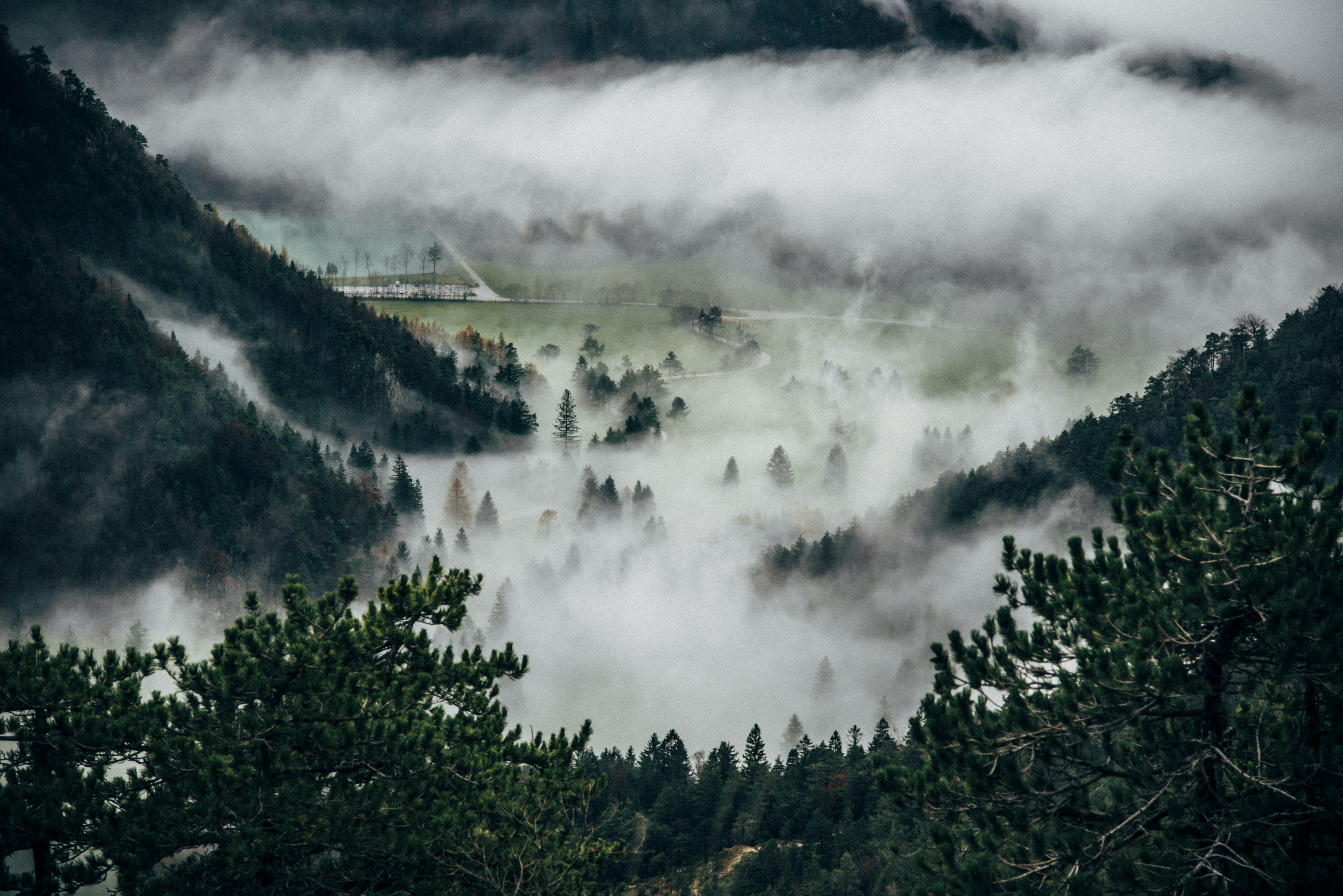 A wooded valley shrouded in a thick mist