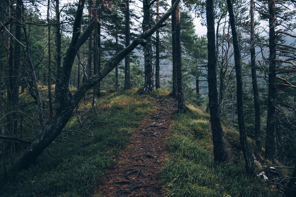 photo of soil road surrounded by trees