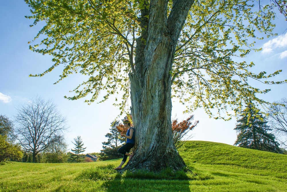 100 Big Tree Pictures Hd Download Free Images Amp Stock