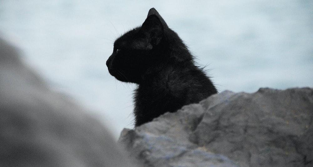 black cat behind stone