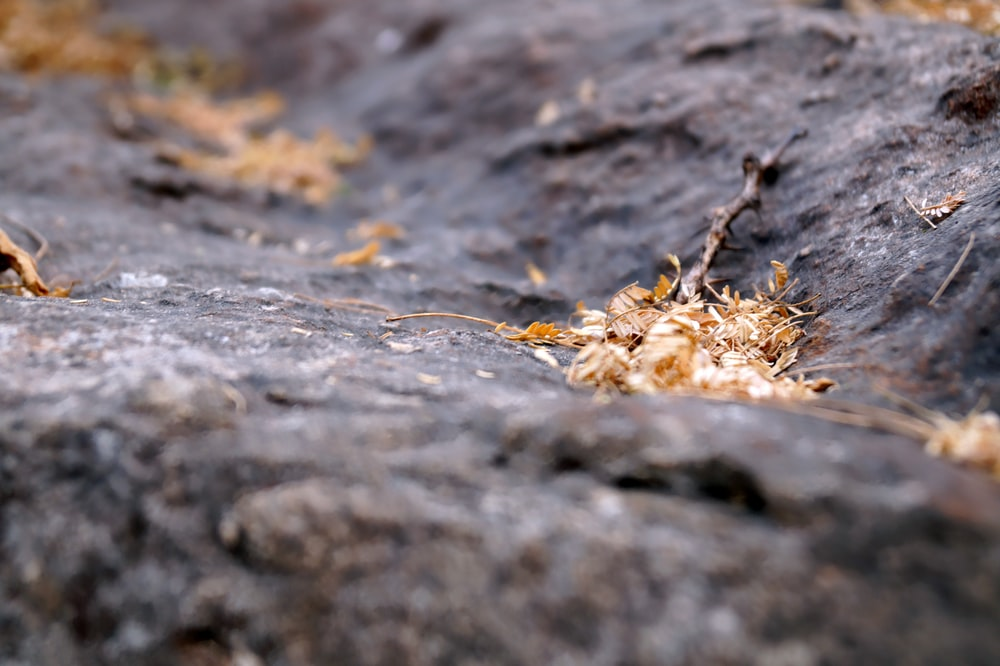 shallow focus photography on dry leaves on rock formation