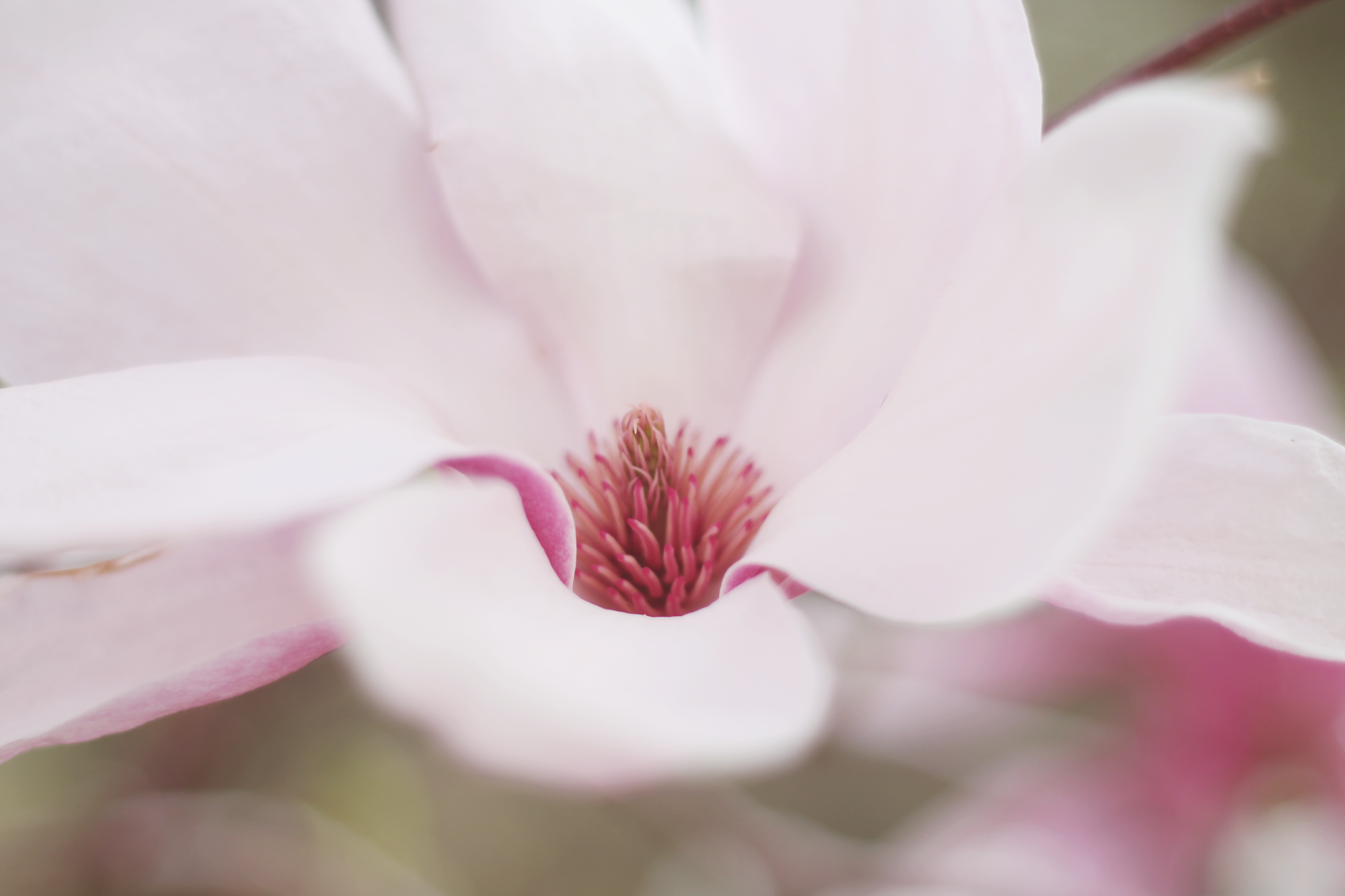 close-up selective-focus photo of pink petaled flower