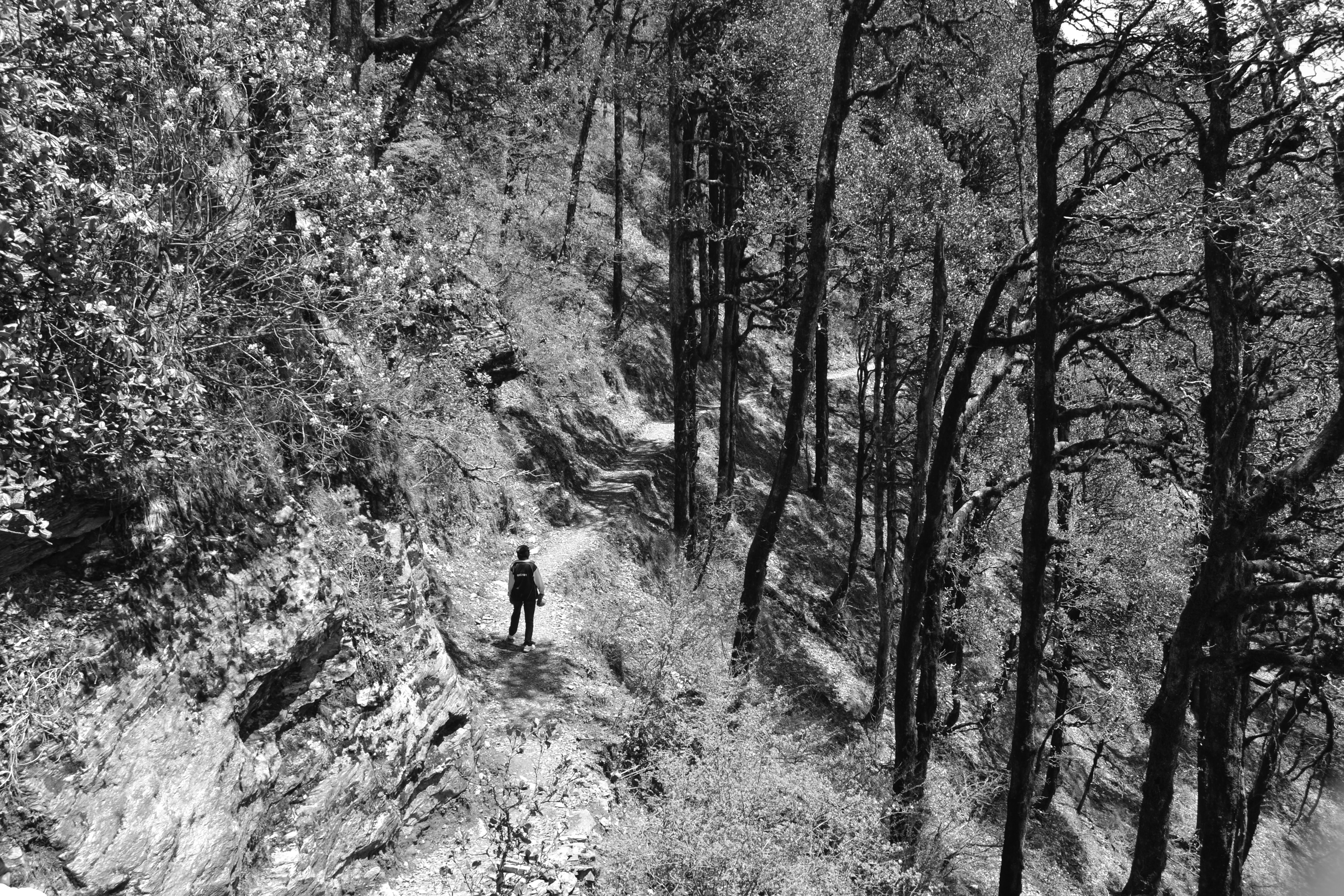 A black-and-white shot of a lone hiker standing on a dirt trail on a wooded slope