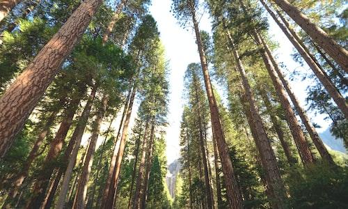 trees pickup line