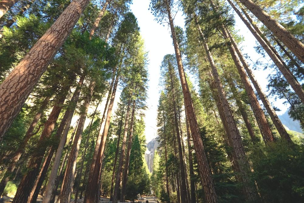 trees between pathway
