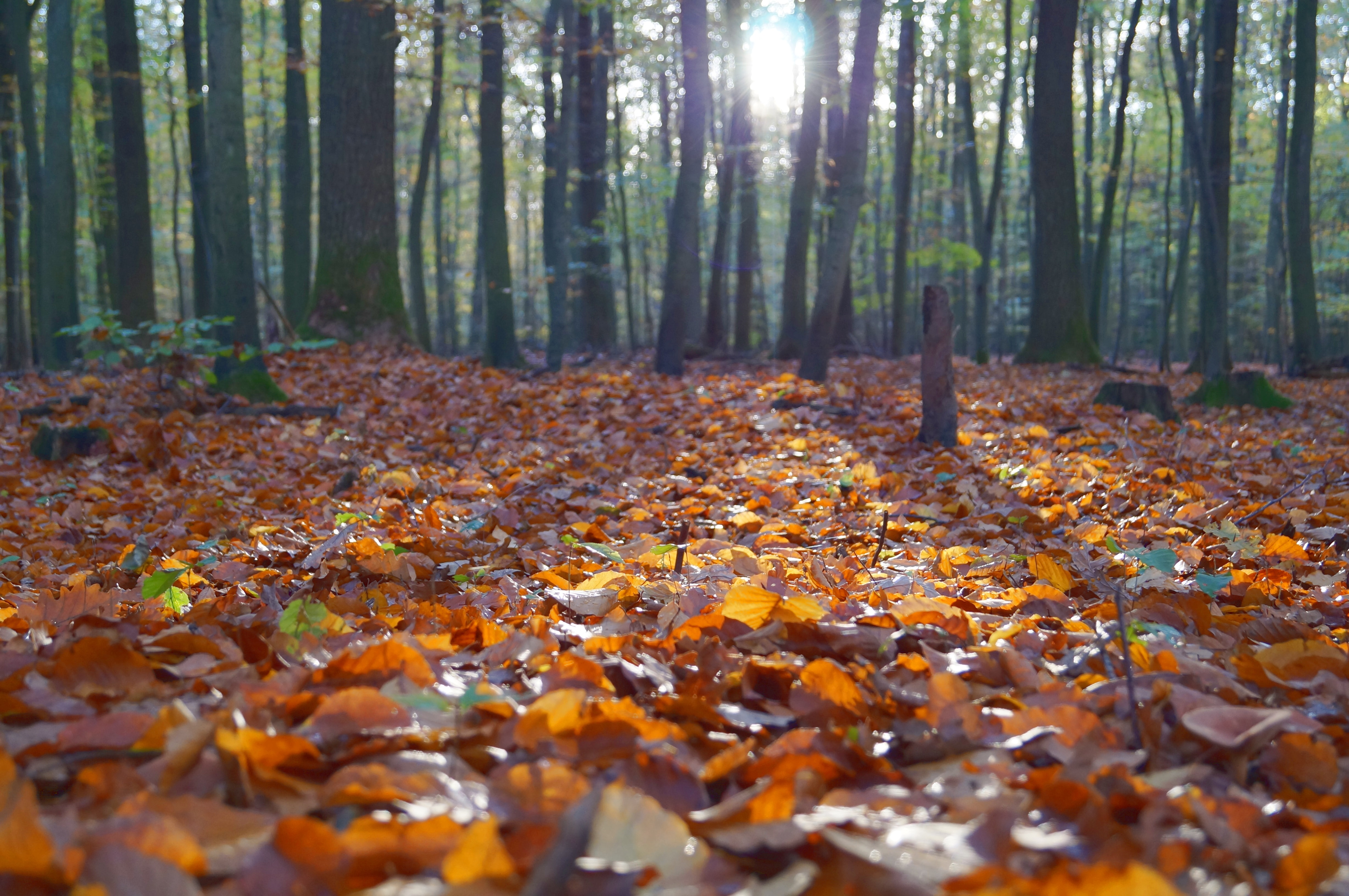 dried leaves on ground