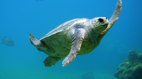 6 Intersting facts about Sea Turtle Biology
