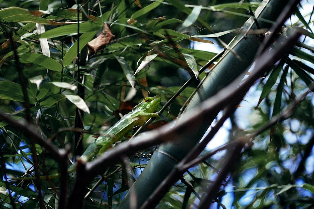 green lizard on branch at daytime