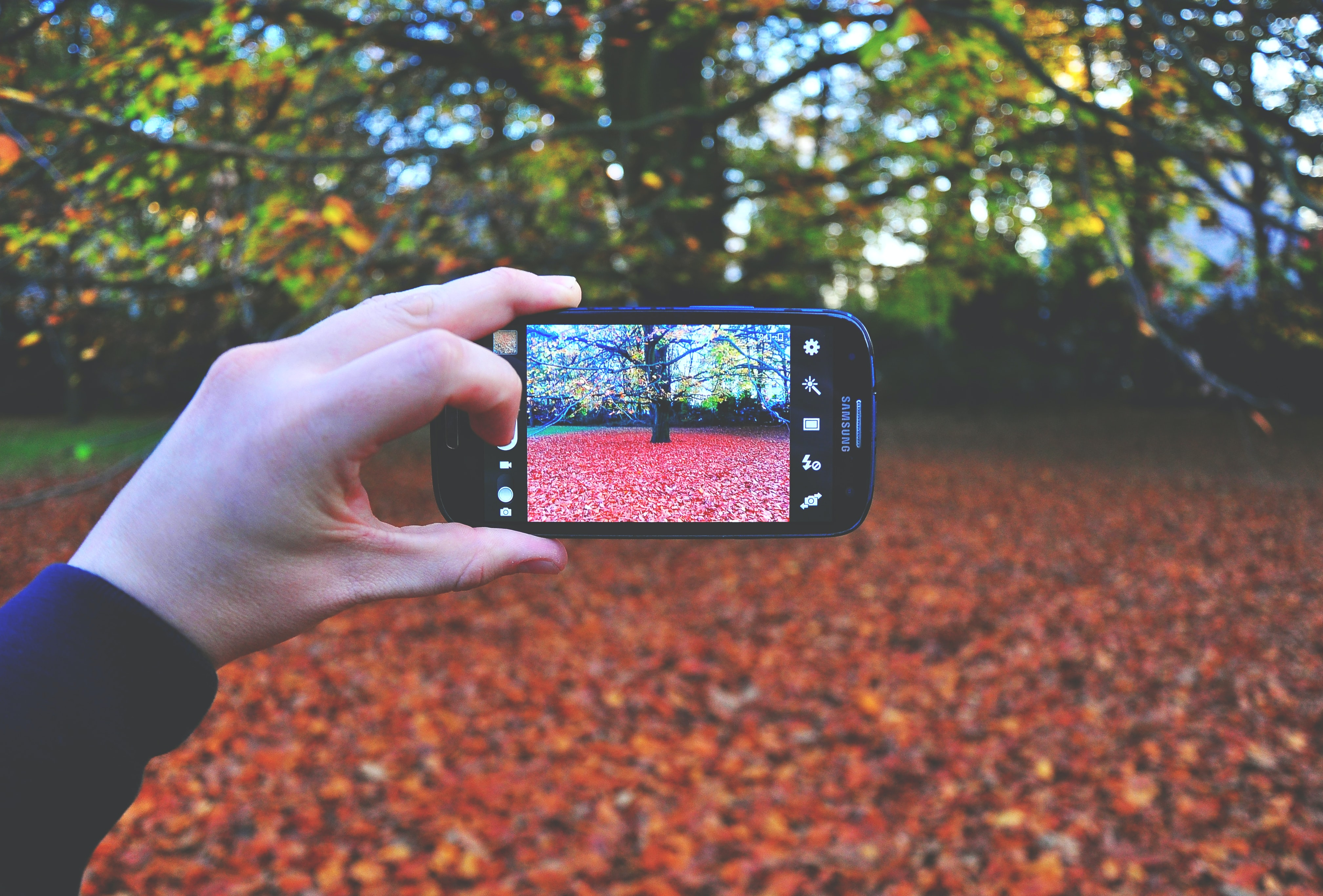 person using smartphone taking photo of tree