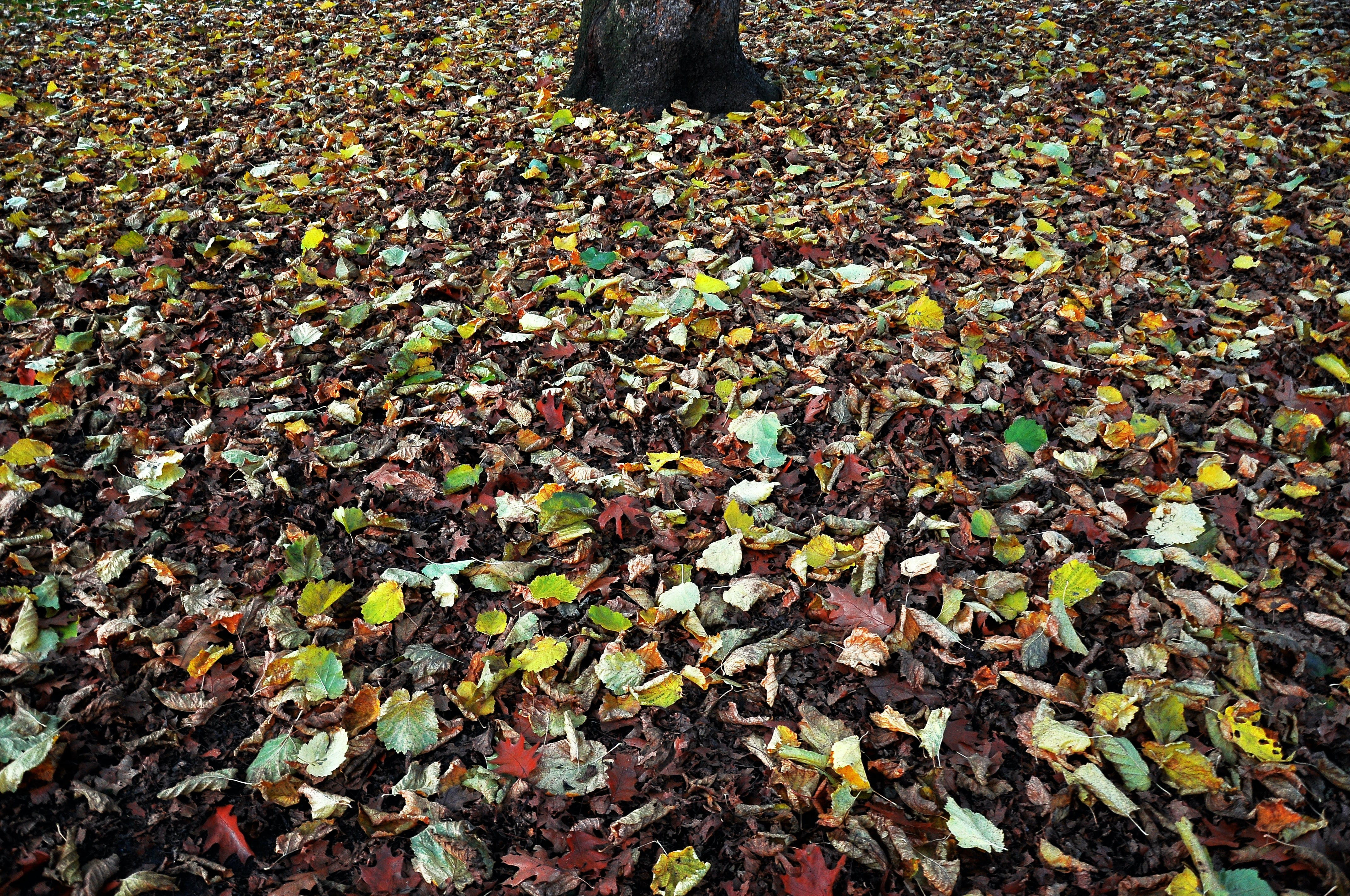 Colorful autumn leaves entirely covering the forest floor near a tree in Hammer Park