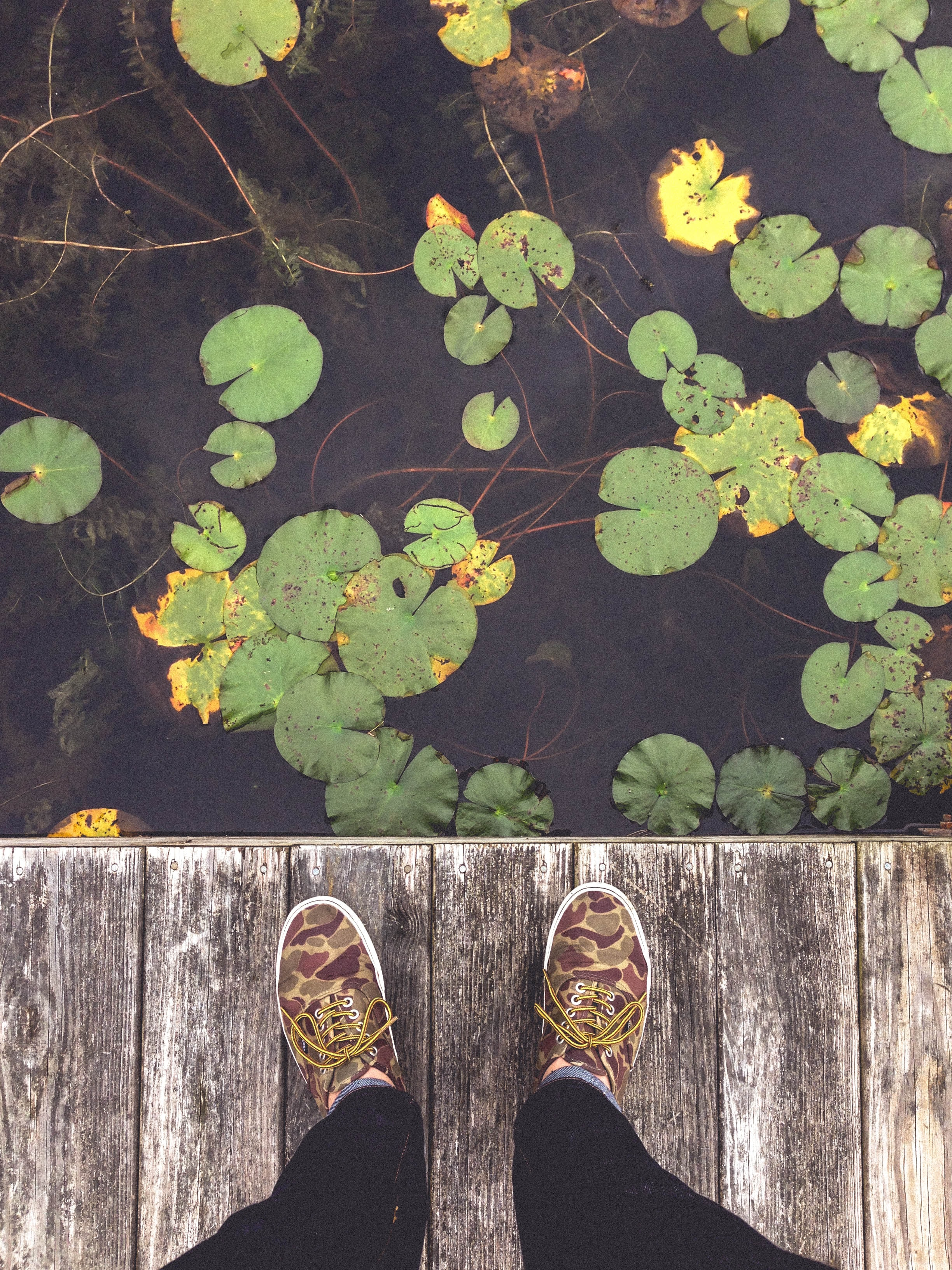 An overhead shot of a person's feet on a wooden deck next lily pads on a pond