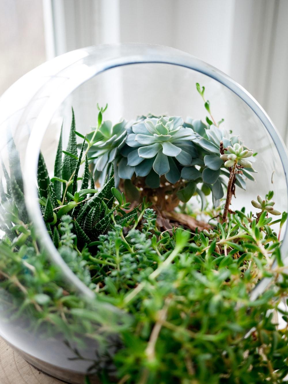 succulent plants in clear glass terrarium