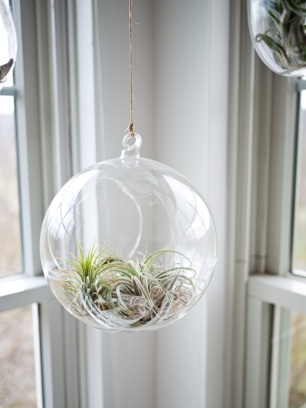 shallow focus photography of clear glass hanging terrarium