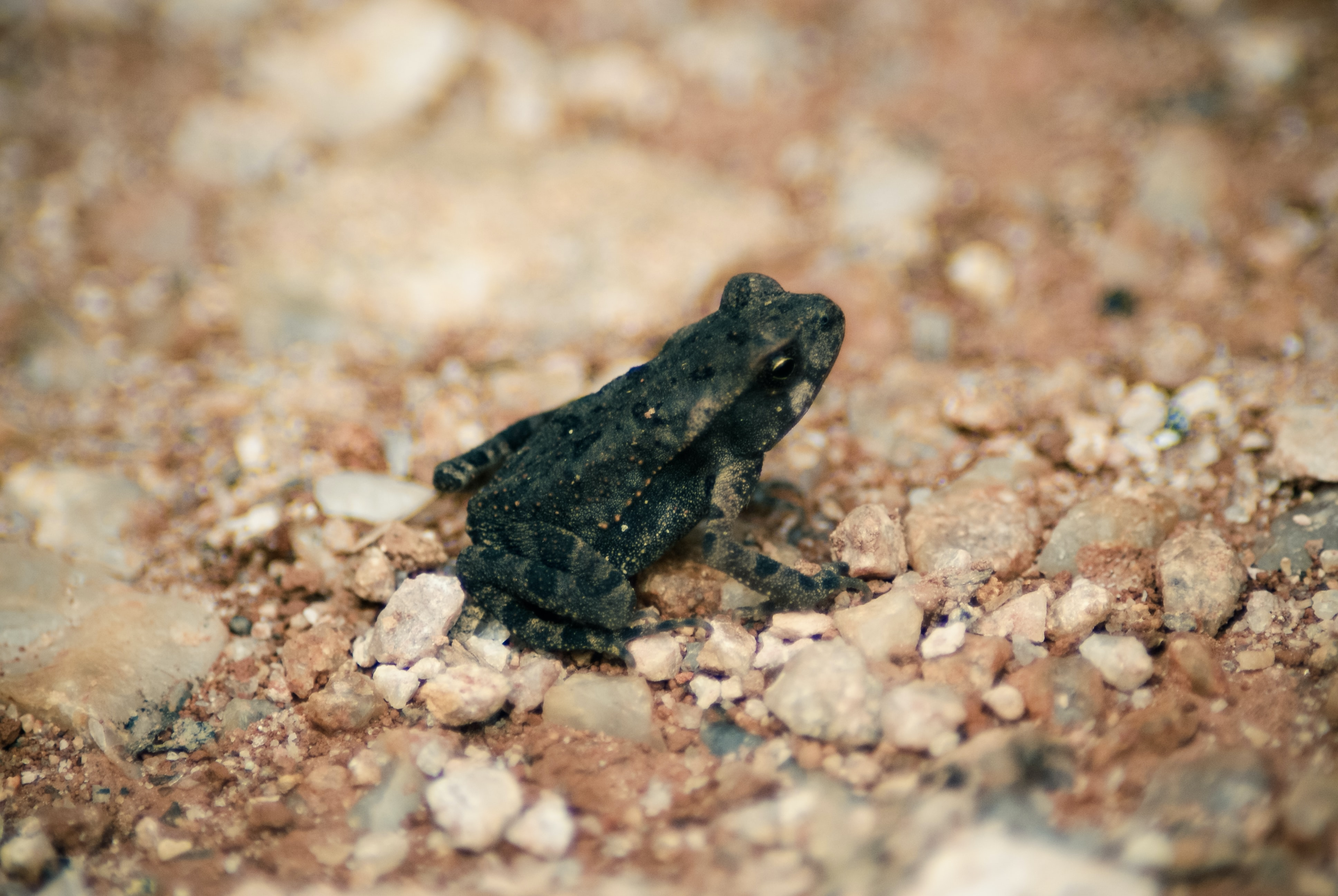 shallow focus photography of black frog