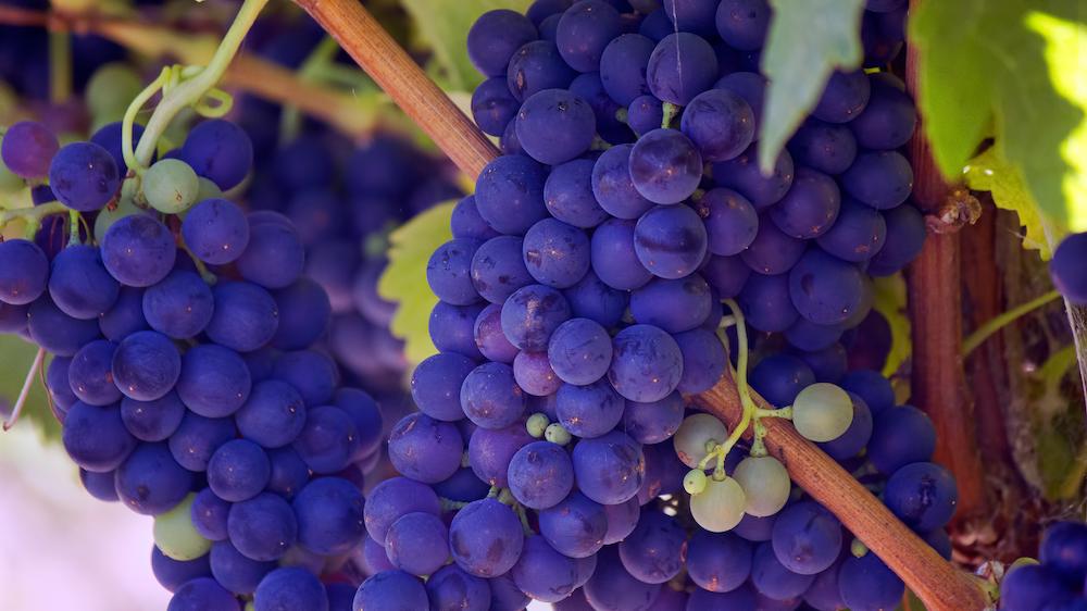 photo of purple grape fruits
