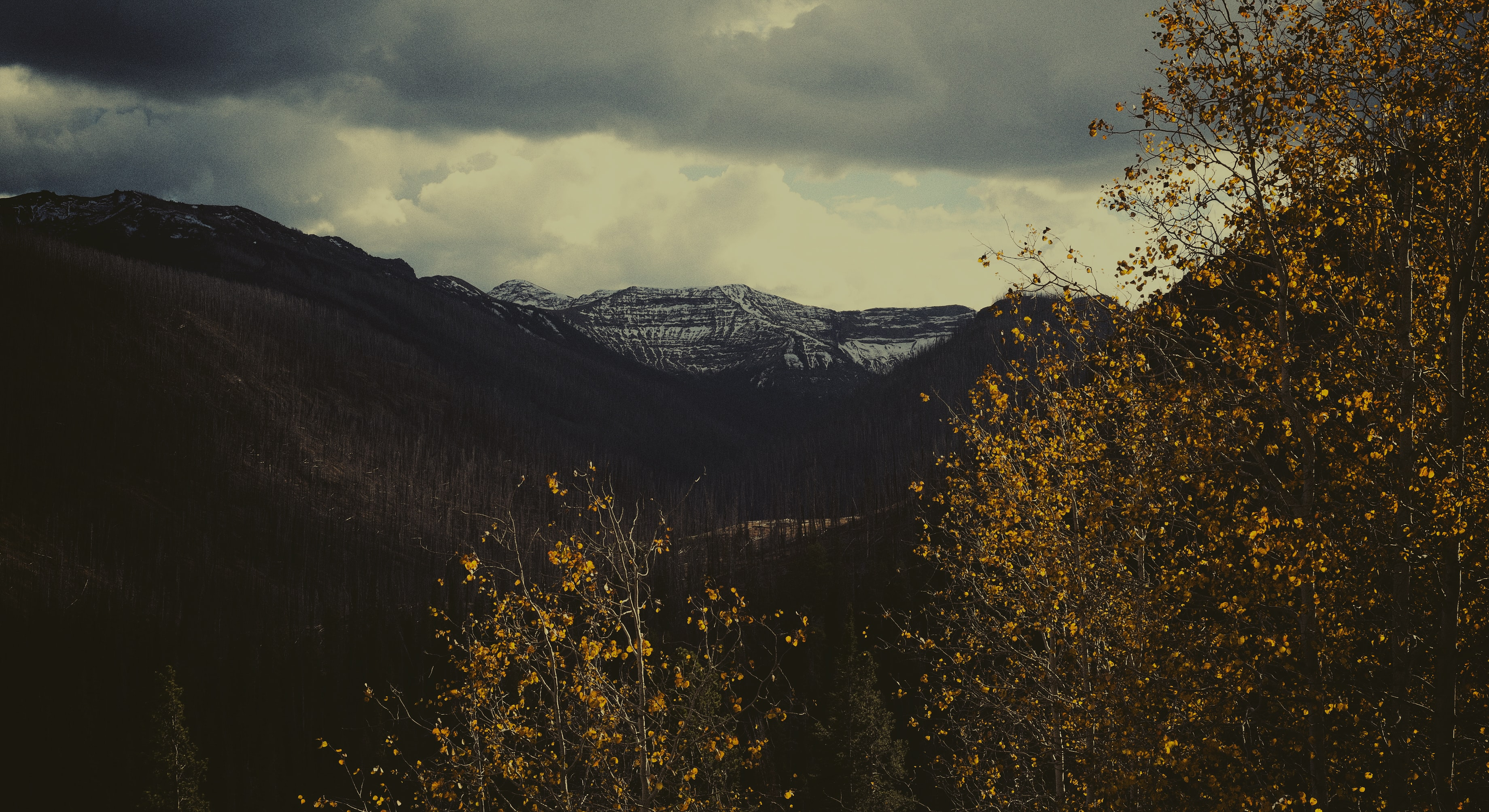 A view through autumn branches on the snow-capped mountains in the distance