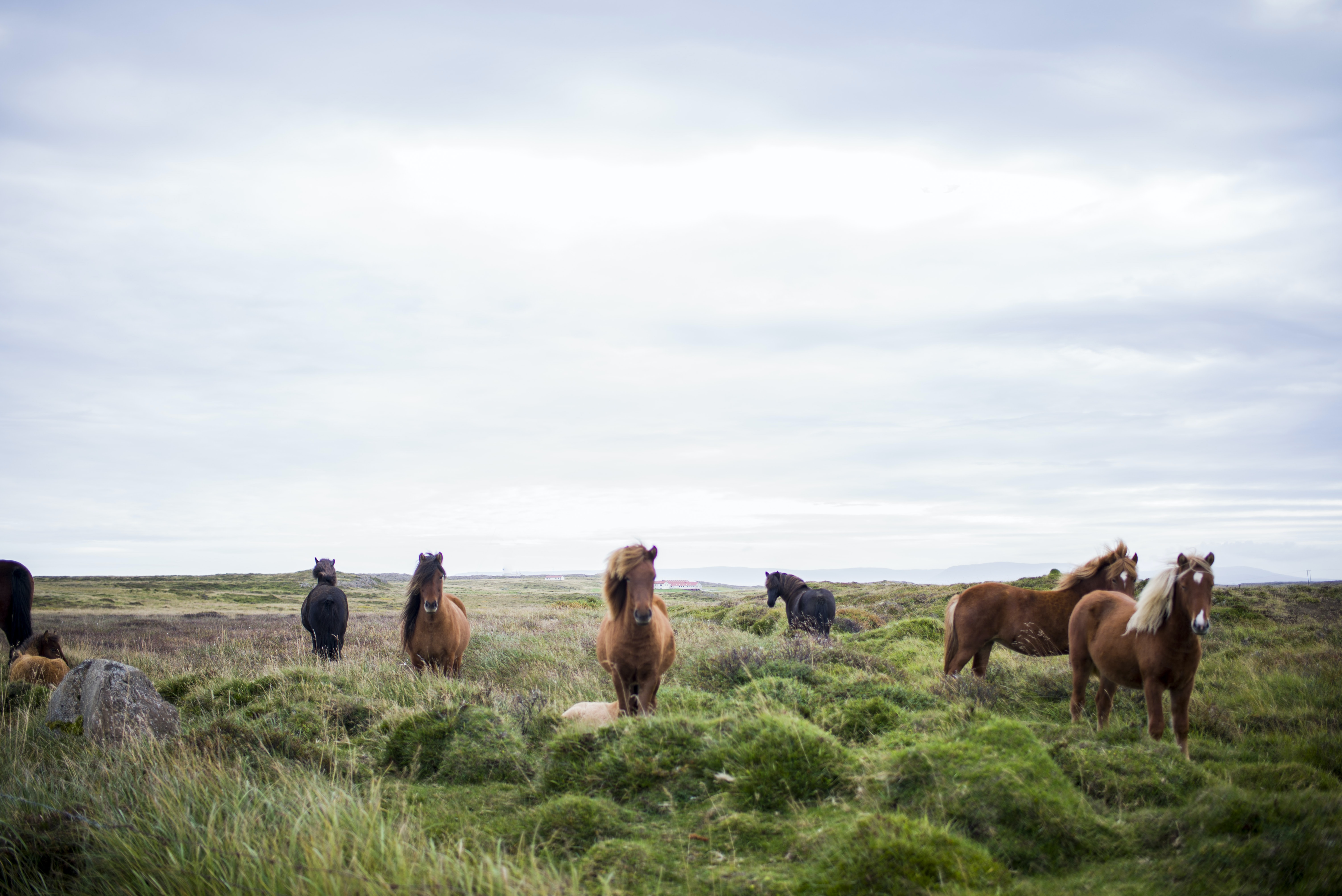 A herd of wild horses grazing in a green meadow