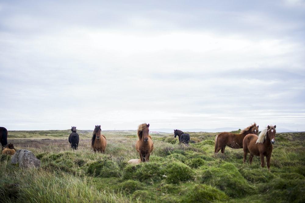 herd of horse on green grass