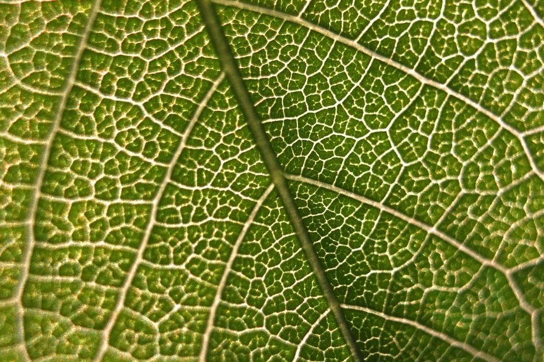 Transitions écologique et numérique : quelles (in)compatibilités ?
