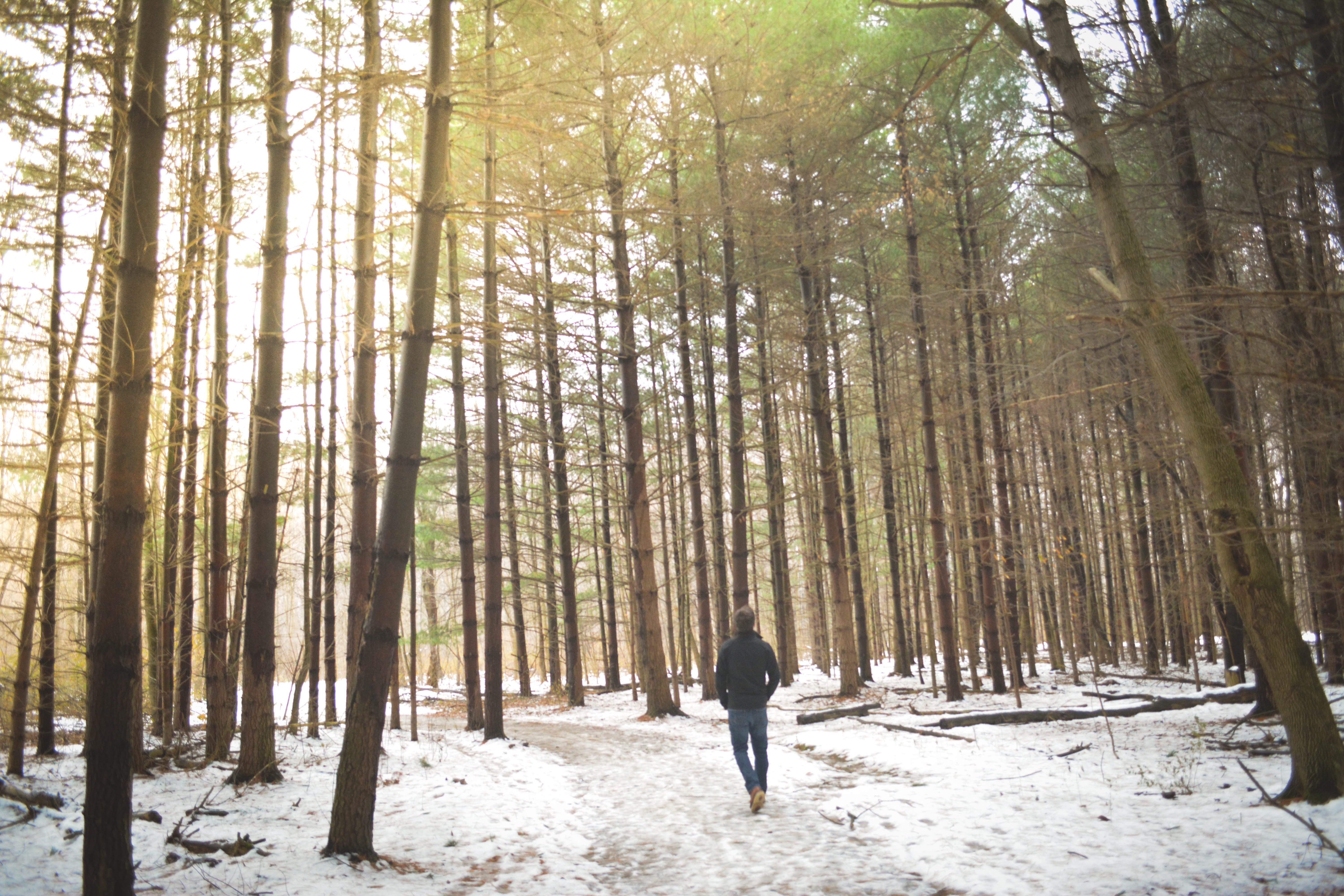 A lone man walking on a snowy path in a forest