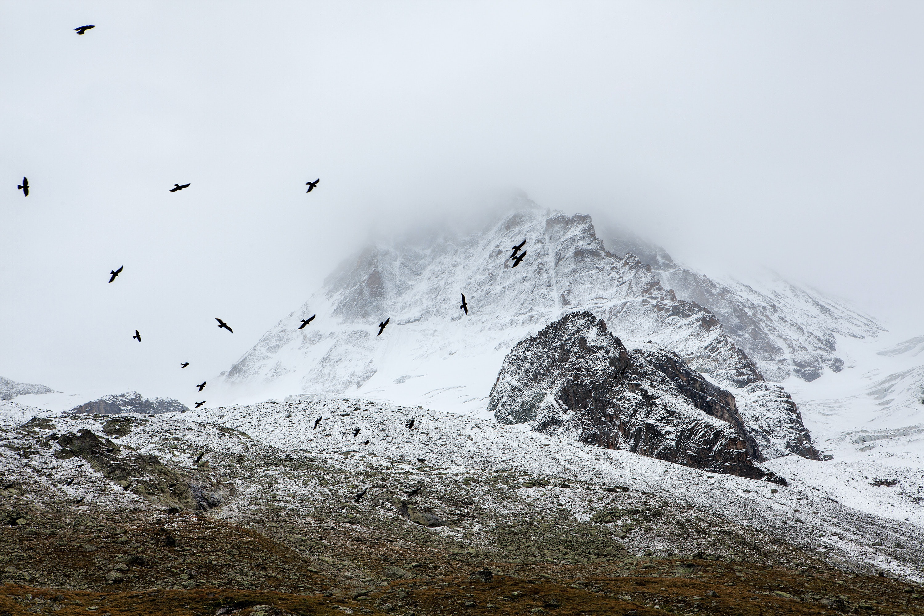 birds flying in the sky above snow covered mountain