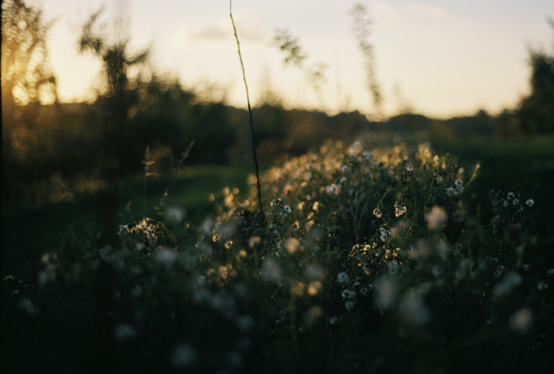 A fuzzy shot of a patch of flowers during sunset