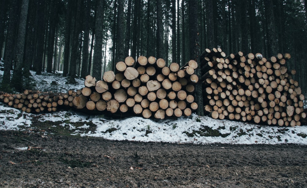 logs stack beside trees