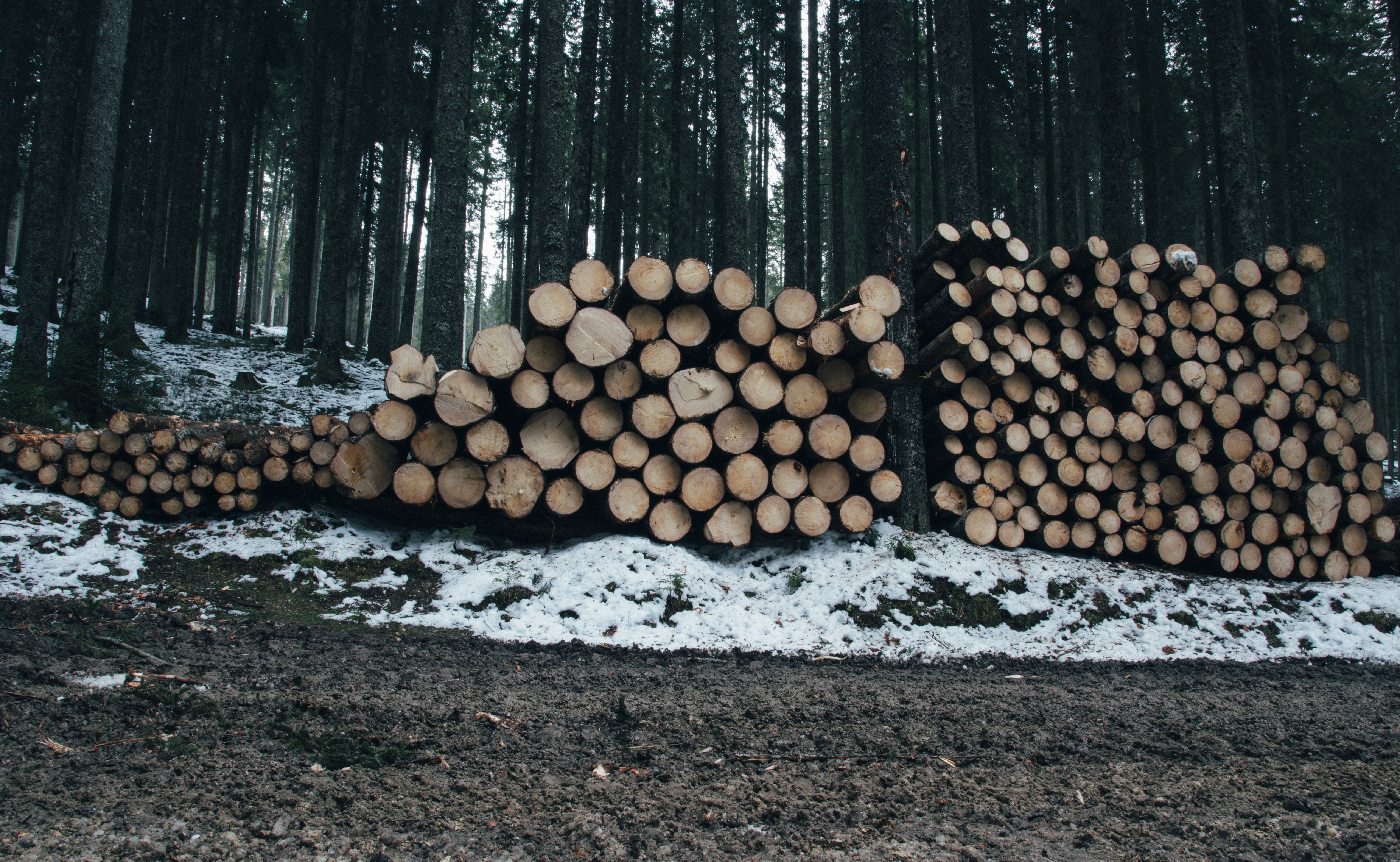 Enormous amounts of timber lay stacked on the floor of a lush forest during a winter day.